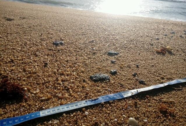Mais de 45 quilos de fragmentos de óleo cru são recolhidos nas praias de Linhares